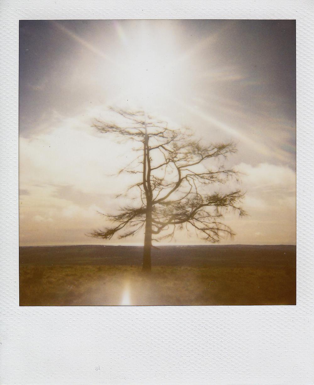 brown caterthun tree.jpg