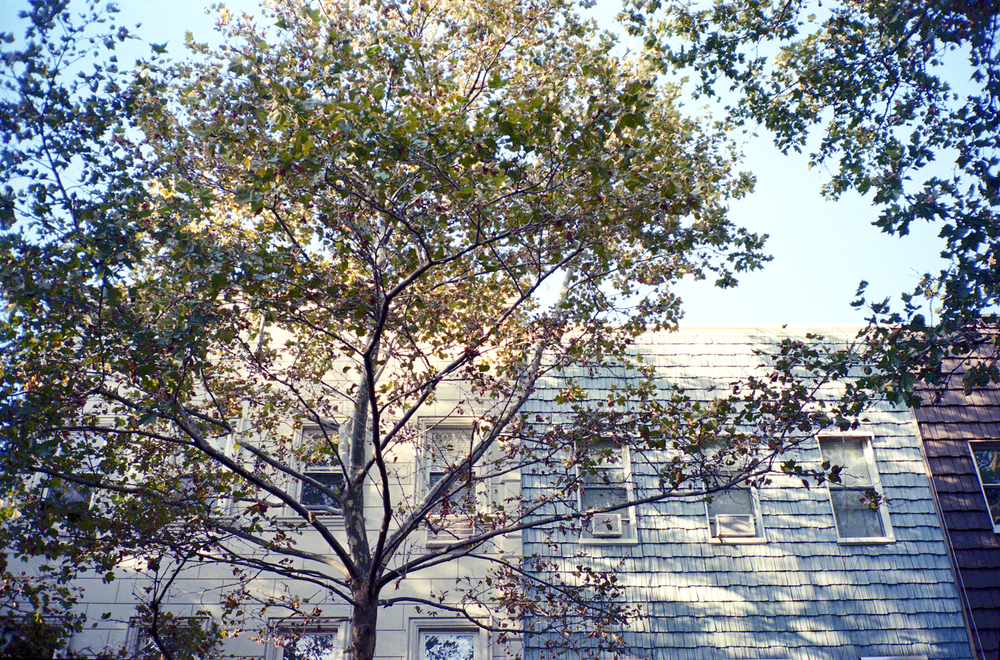 Brooklyn Trees.jpg