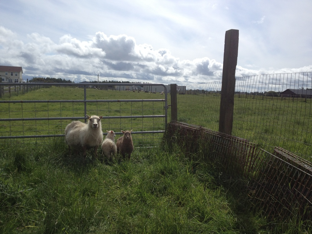 mama-and-her-lambs1.jpg