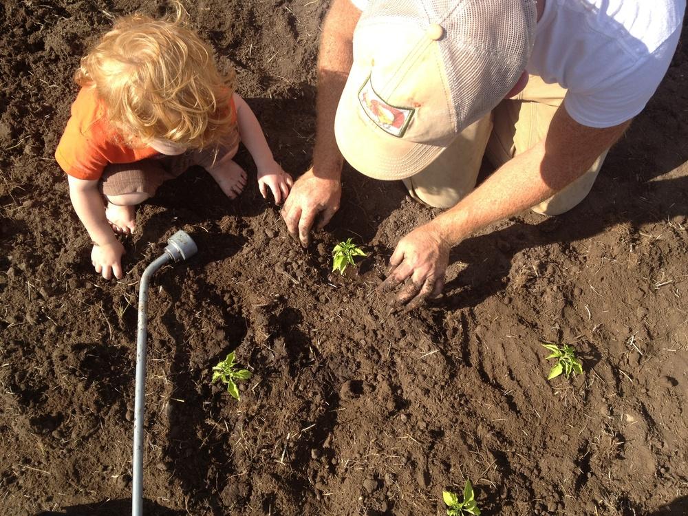planting-peppers-2.jpg