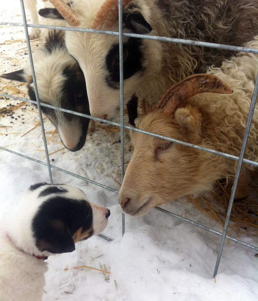 farmdogs_14.jpg