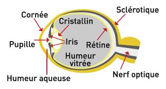 Les verres solaires — CG Optic - Votre Opticien à Kembs   Sierentz 511fcf6e0295