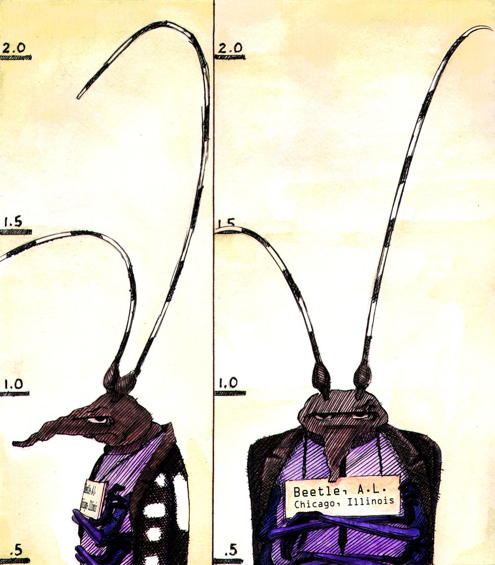 USDA Beetle.jpg