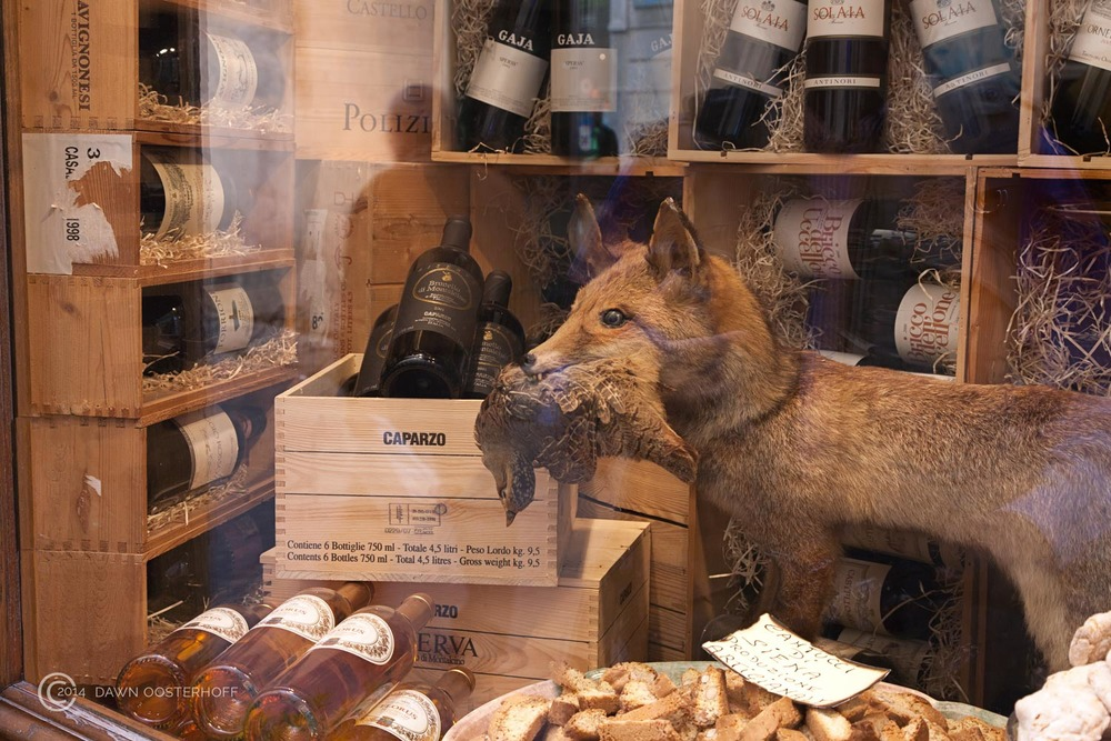 Fox in a Wine House