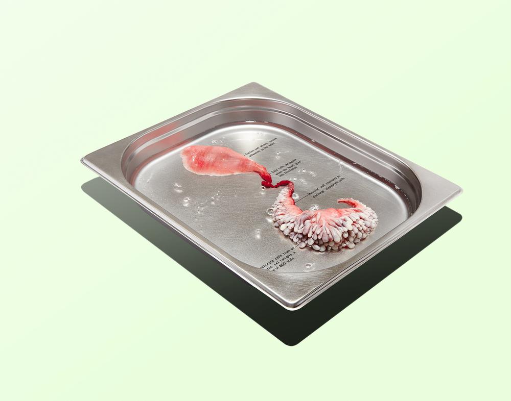 Circumventive-Organs.jpg