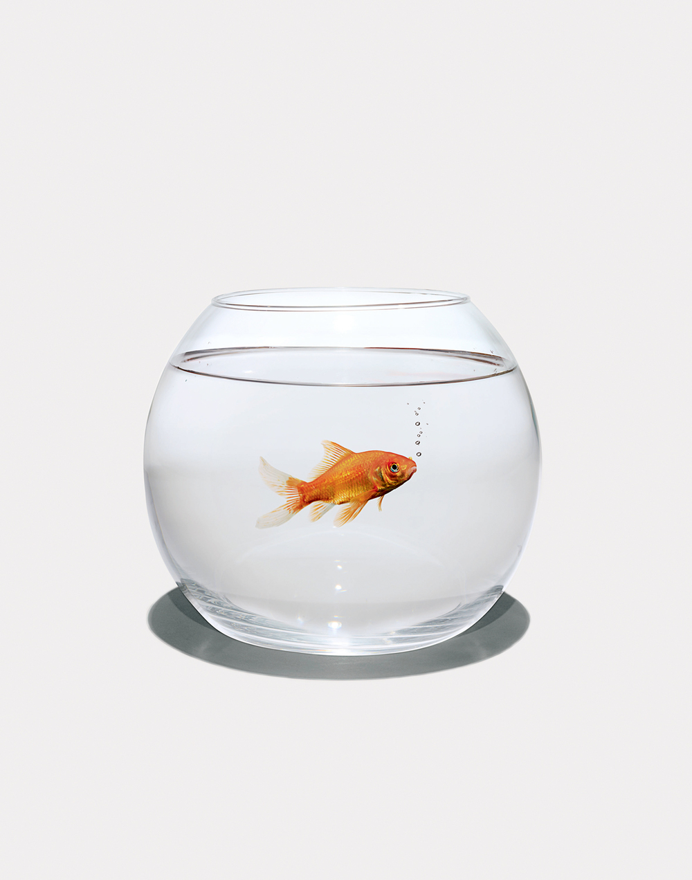 Fish-in-Bowl.jpg
