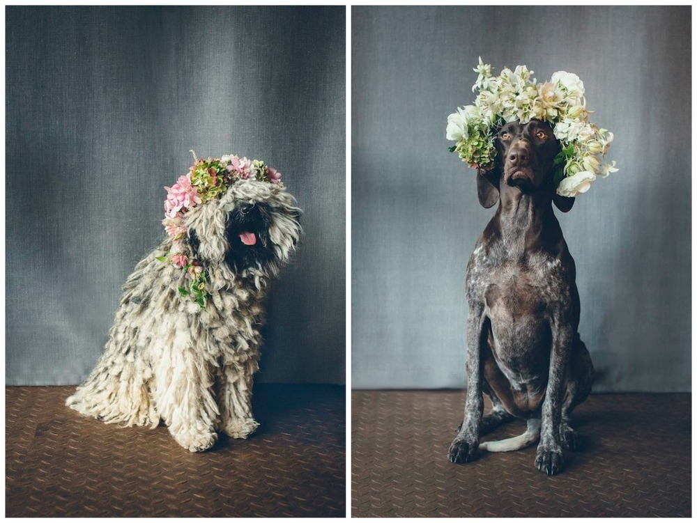 Burnetts Boards. My two favorite wedding trends: flower crowns and pets in weddings. Combining them is just too much for my heart to handle!