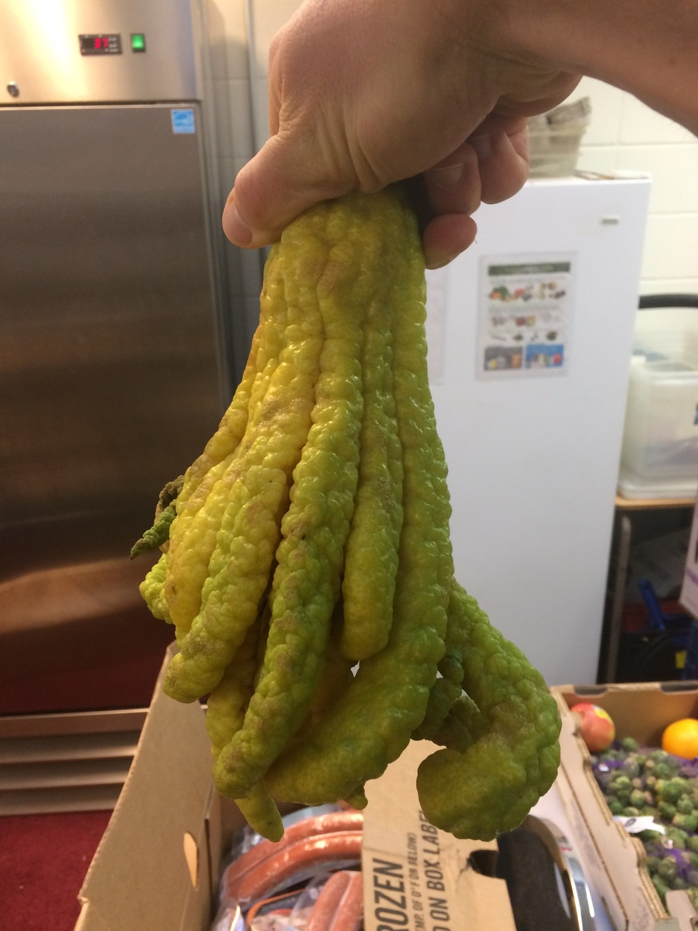 This fruit is real.  And what happens when an octopus gets drunk and goes after a lemon.