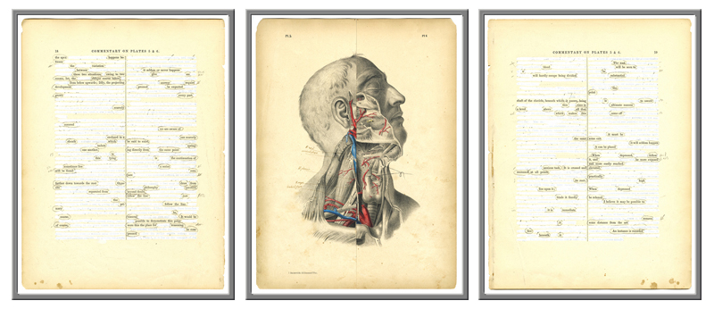 Surgical Pages. Plates 5 and 6