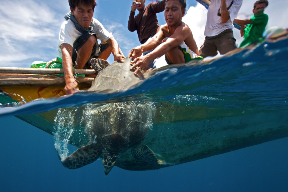 Turtle release in Alcantara, Cebu, Philippines (Photo: Steve De Neef)