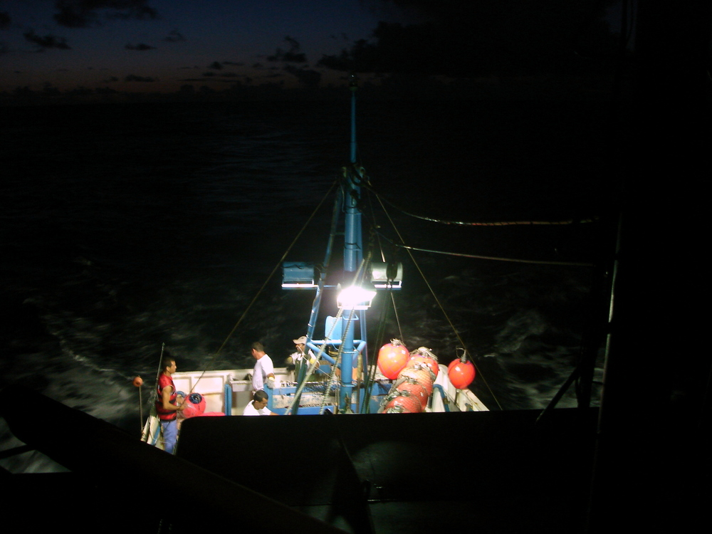 Night setting (Photo: Ricardo Hoinkis, Projeto Albatroz)