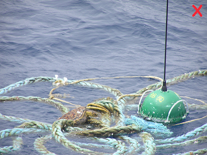 Don't use tangled ropes; they can entrap turtles. (Photo: FADIO/IRD-Ifremer/M. Taquet)