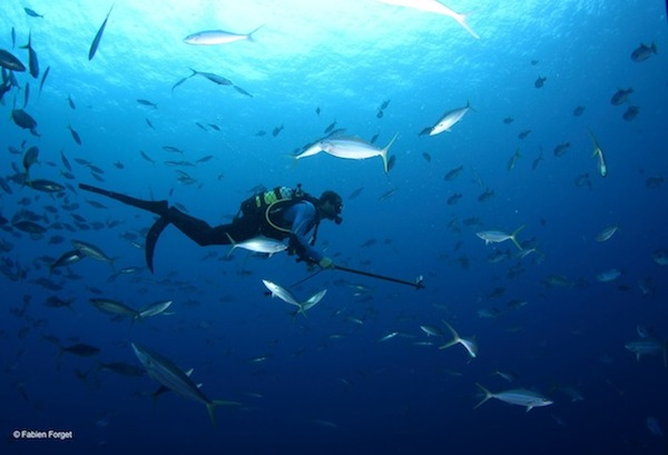 ISSF-sponsored scientist observing fish behavior during a bycatch research cruise in the Indian Ocean