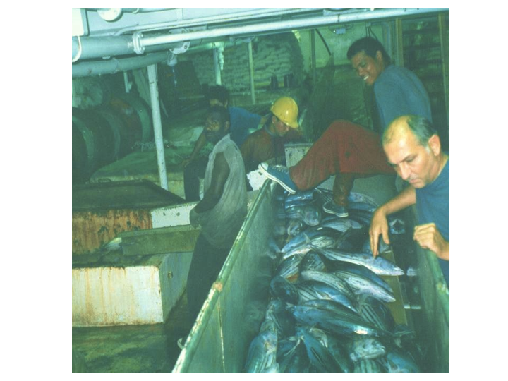 Below the deck, the fish are sorted into wells. (Photo: SPC)