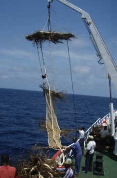 FAD constructed with biodegradable materials including palm leaf cover and small mesh jute netting commencing 10 m below the raft (Photo: AZTI-Tecnalia)
