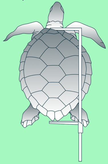 CL (carapace length): for turtles (Photo: SPC)