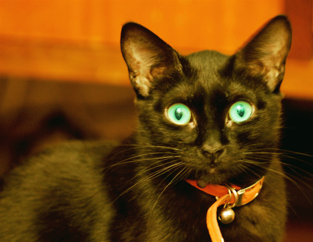 Photo Credit: Astonished Black Cat | Pedro Ribeiro Simões| Flickr Creative Commons | Attribution License (c)