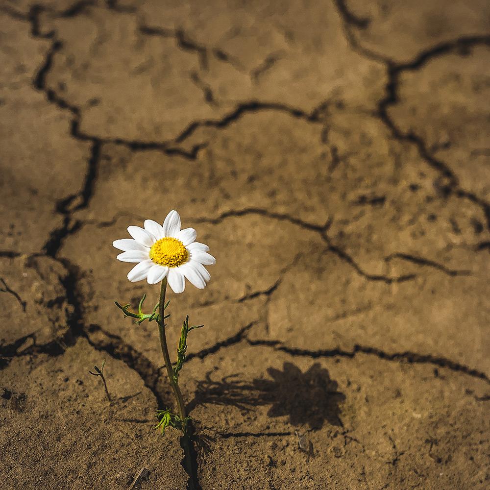 ID 118753549 © Abdellah Boughazoual | Dreamstime.com