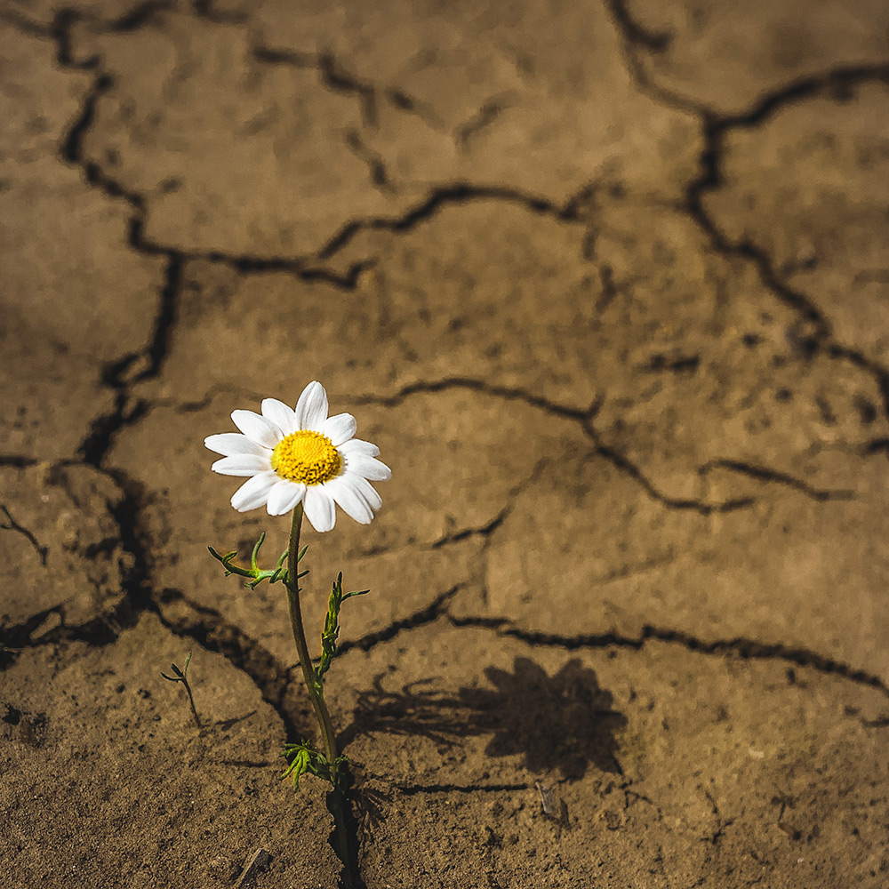 flower-in-desert.jpg