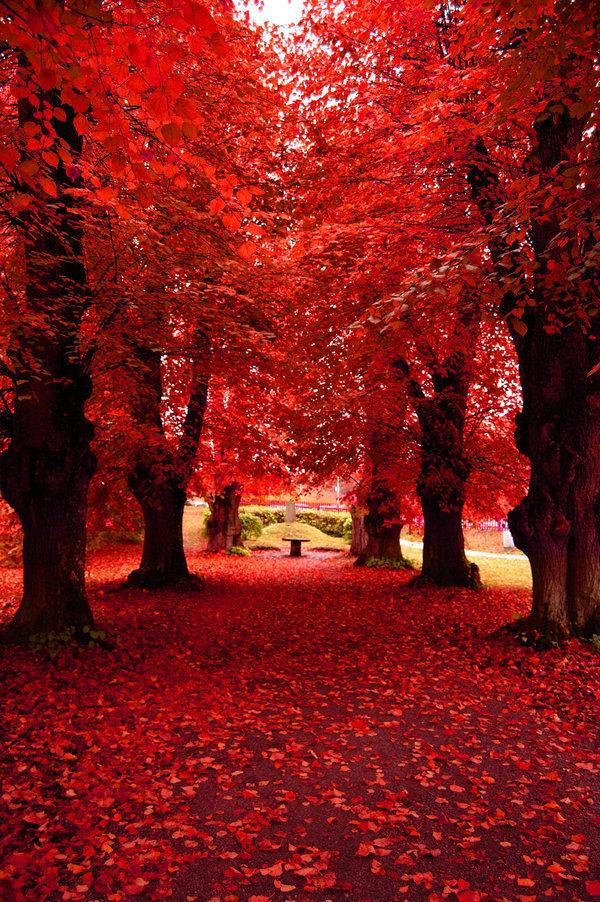 Fall-beautiful-nature-22666857-600-902