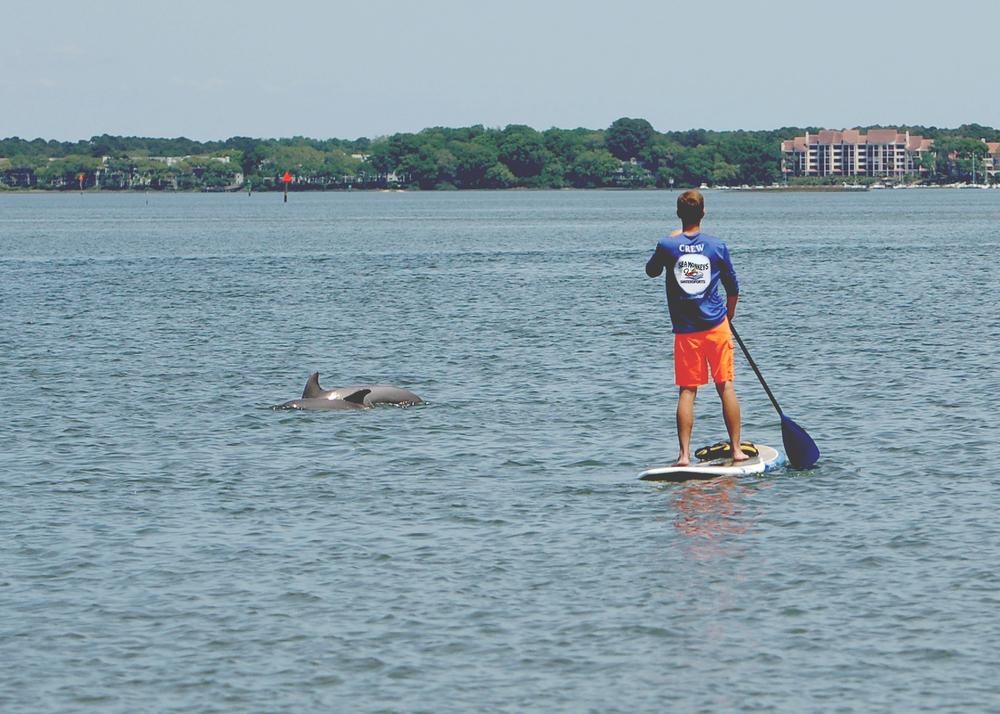 SeaMonkeysHHIDolphins.jpg