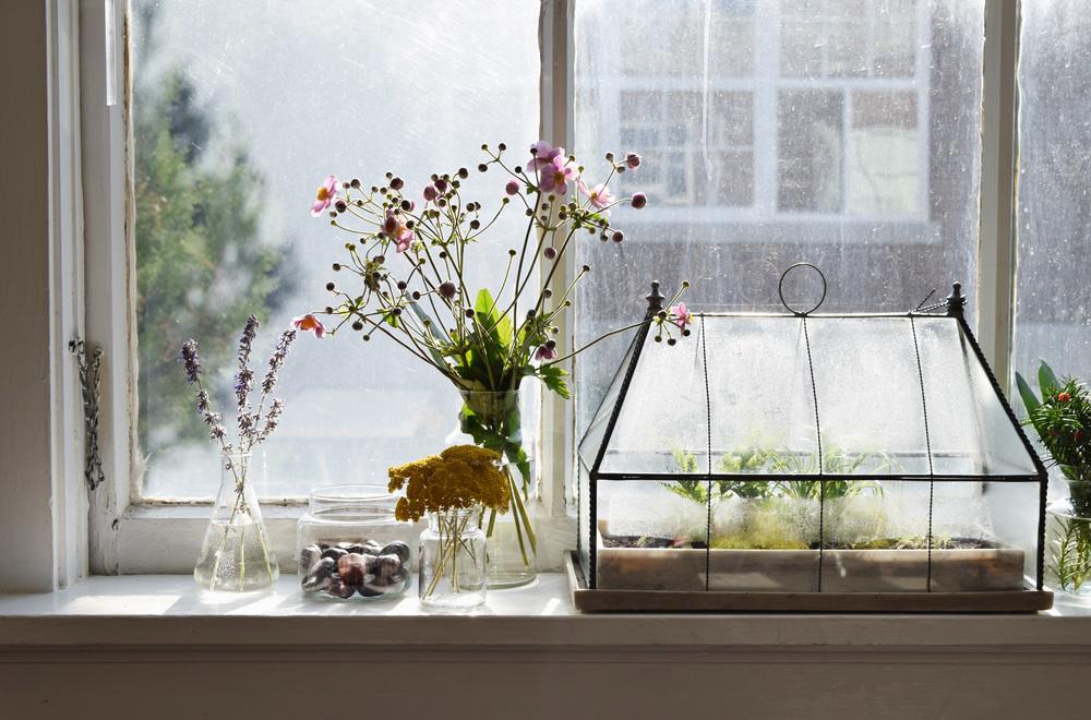 carden+windowsill.jpg