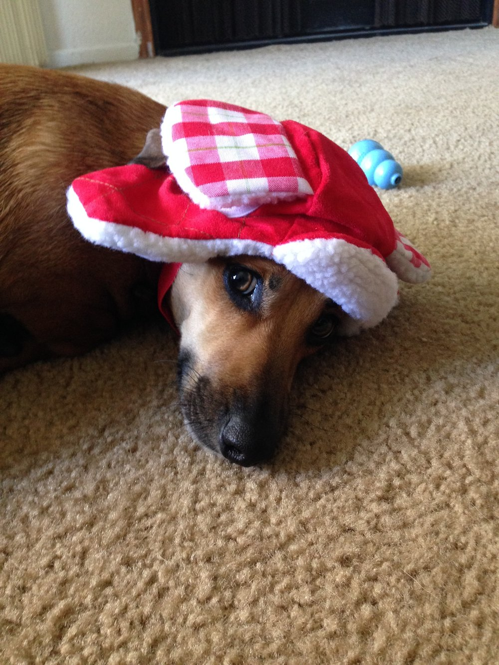 Asher ready for the holidays