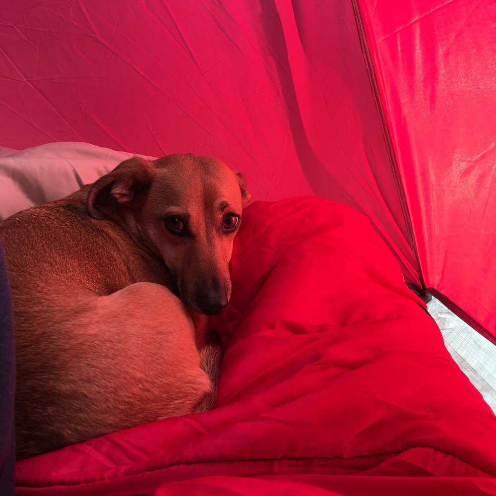 Asher bundled up in the tent