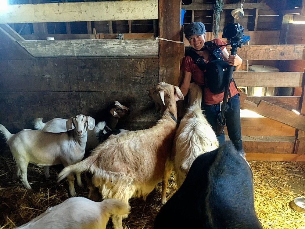 S filming goats.jpg