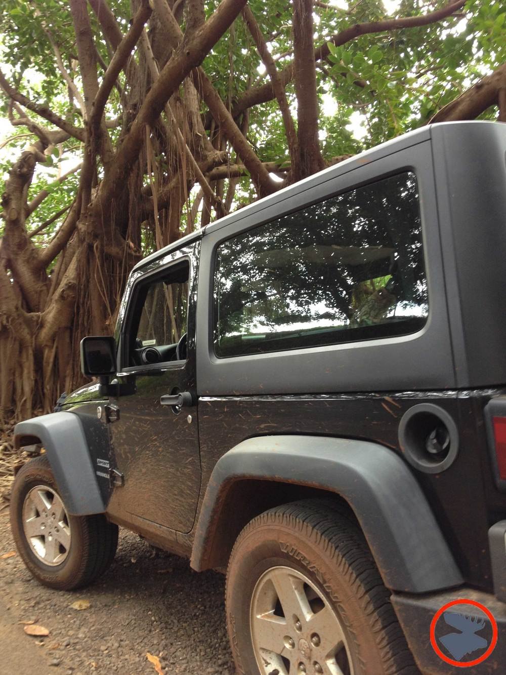 Jeep & Banyon Trees_Kauai.jpg