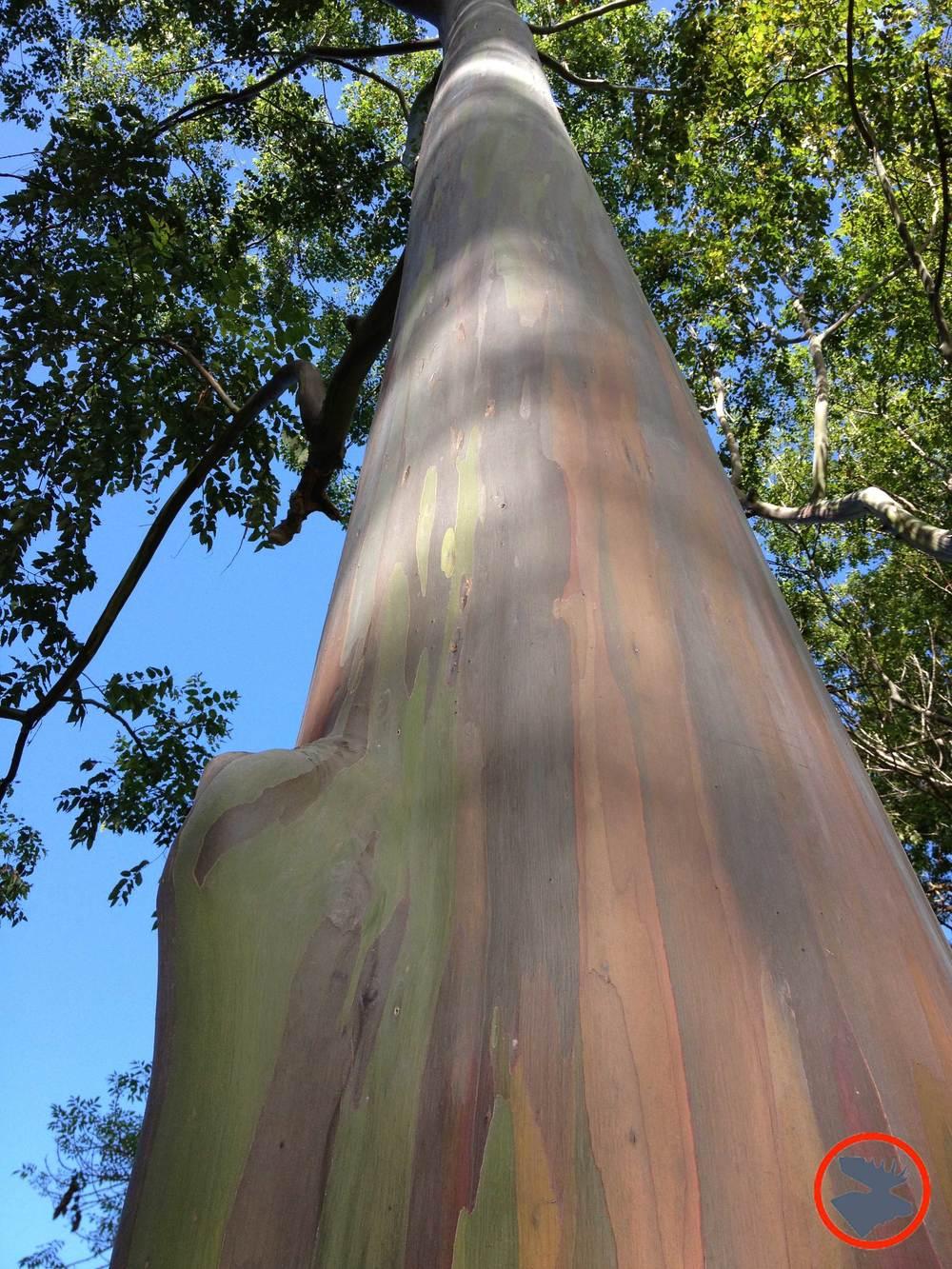 Trees-at-Arboretum_Kauai.jpg