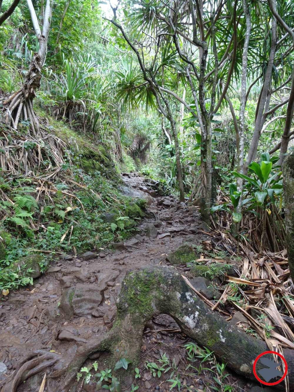 Kalalau-Trail.jpg