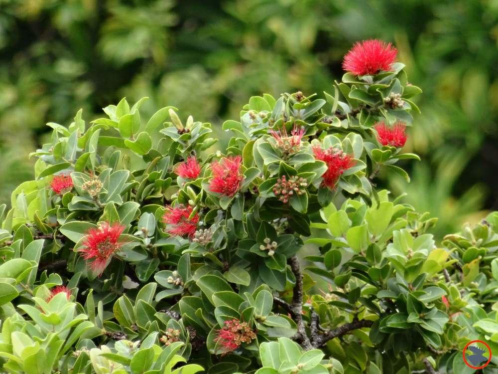 Napali-Flora.jpg