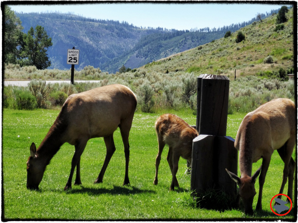 BMP-Post_Yellowstone_Elk1_October-2014.jpg