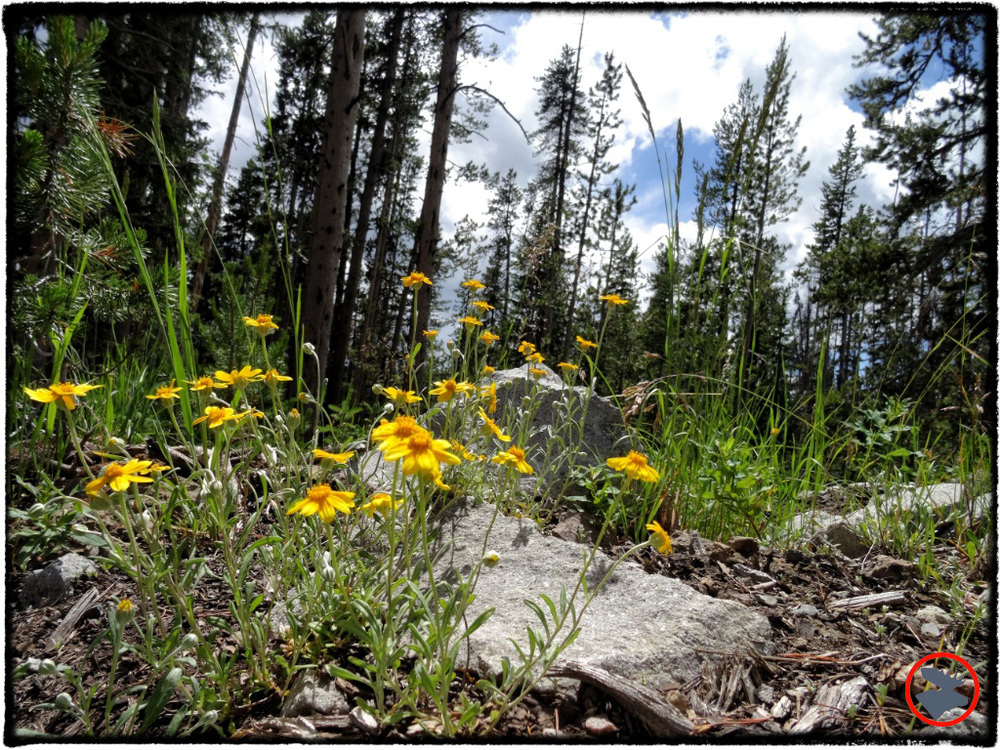 BMP-Post_Expedition-Log_Yellowstone_Flowers_October-2014.jpg