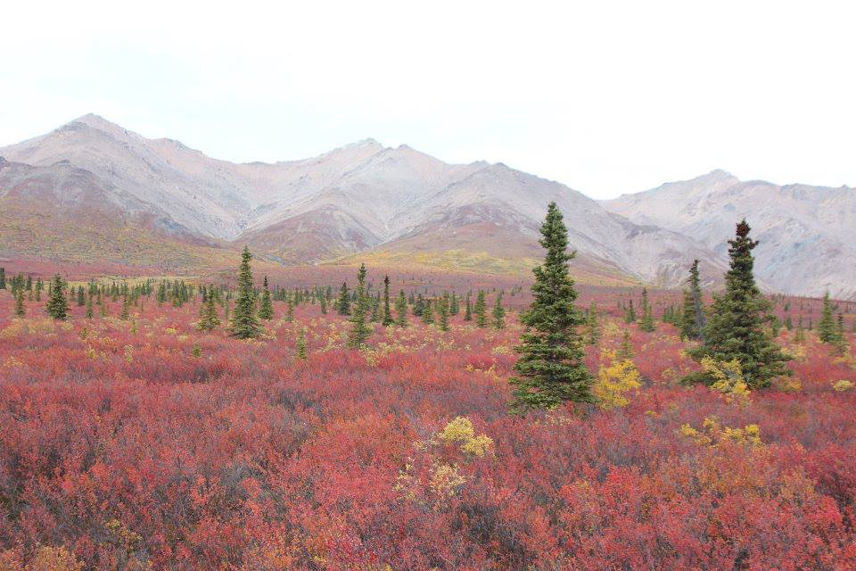 BMP Post_Expedition Log_Denali_Fall Mts_October 2014.jpg