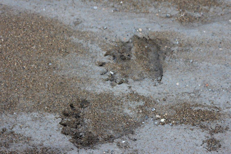BMP Post_Expedition Log_Denali_Bear Tracks_October 2014.jpg