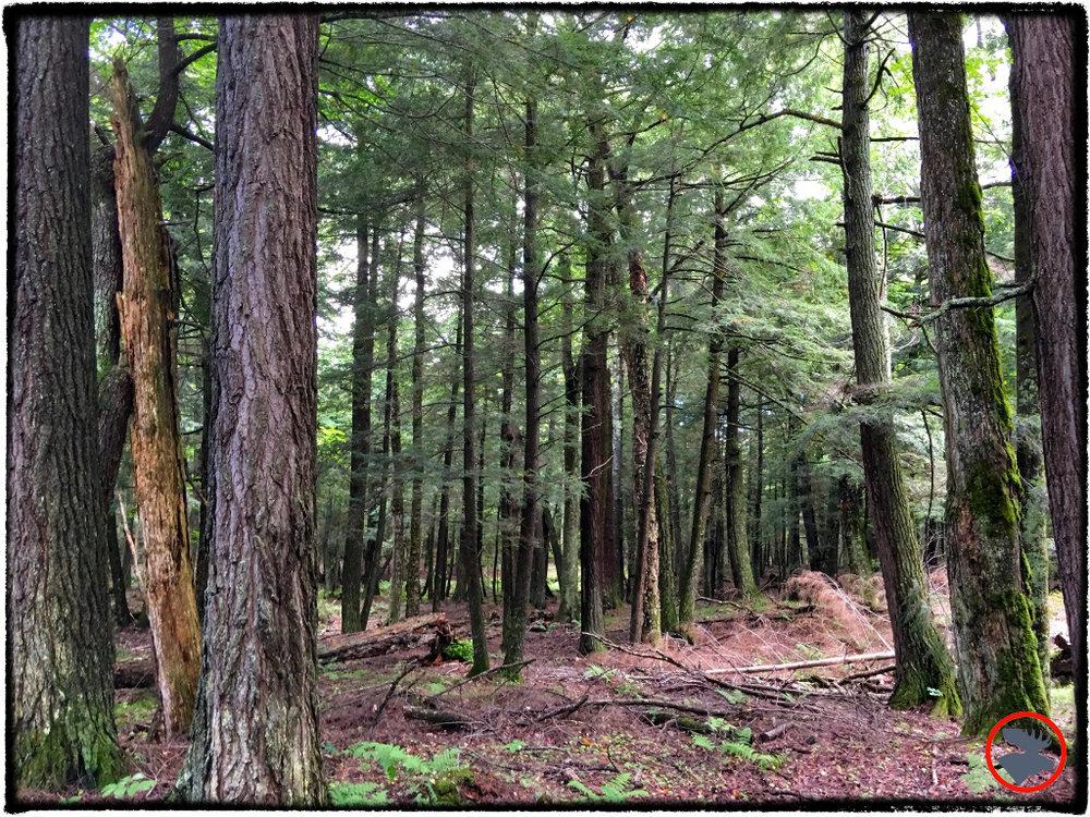 Portage trail in Sylvania