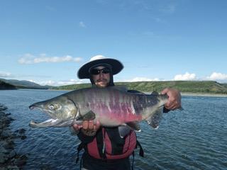 Salmon on the Noatak River.  Photo courtesy of Bob O'Hara.