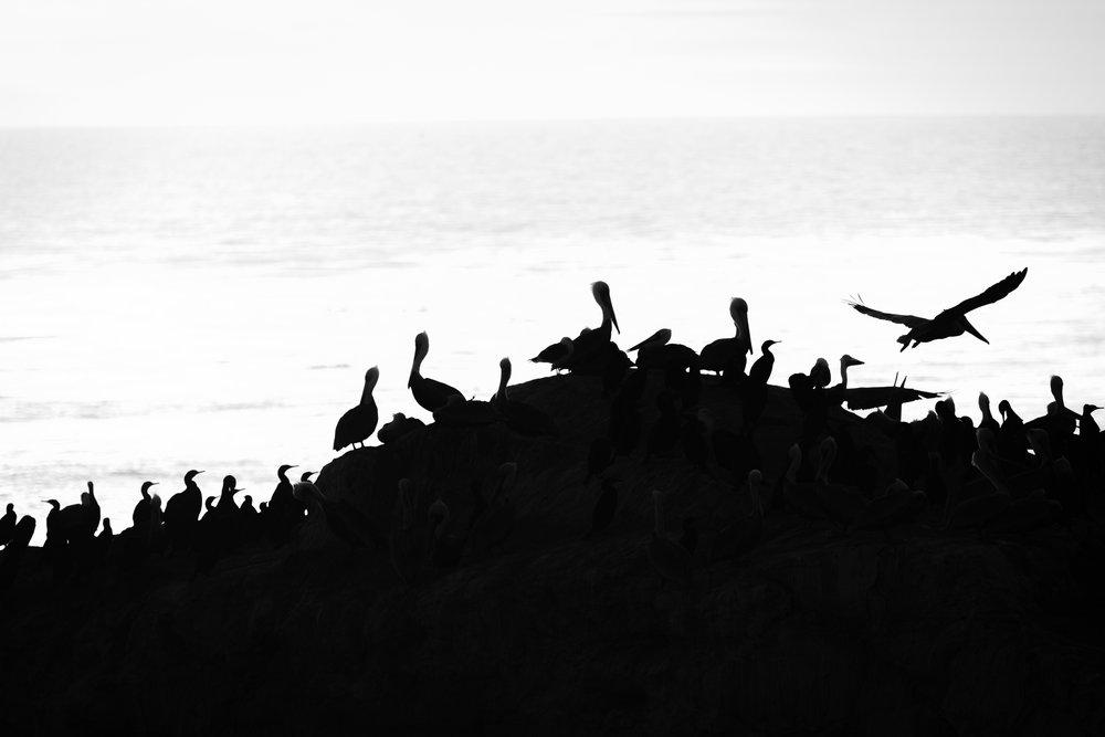 TS - Pelican Rock.jpg