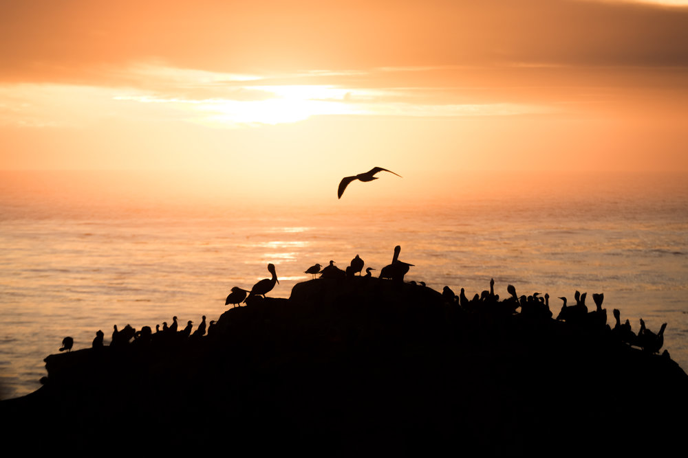 TS - Taking flight at dusk Northwest pacific.jpg