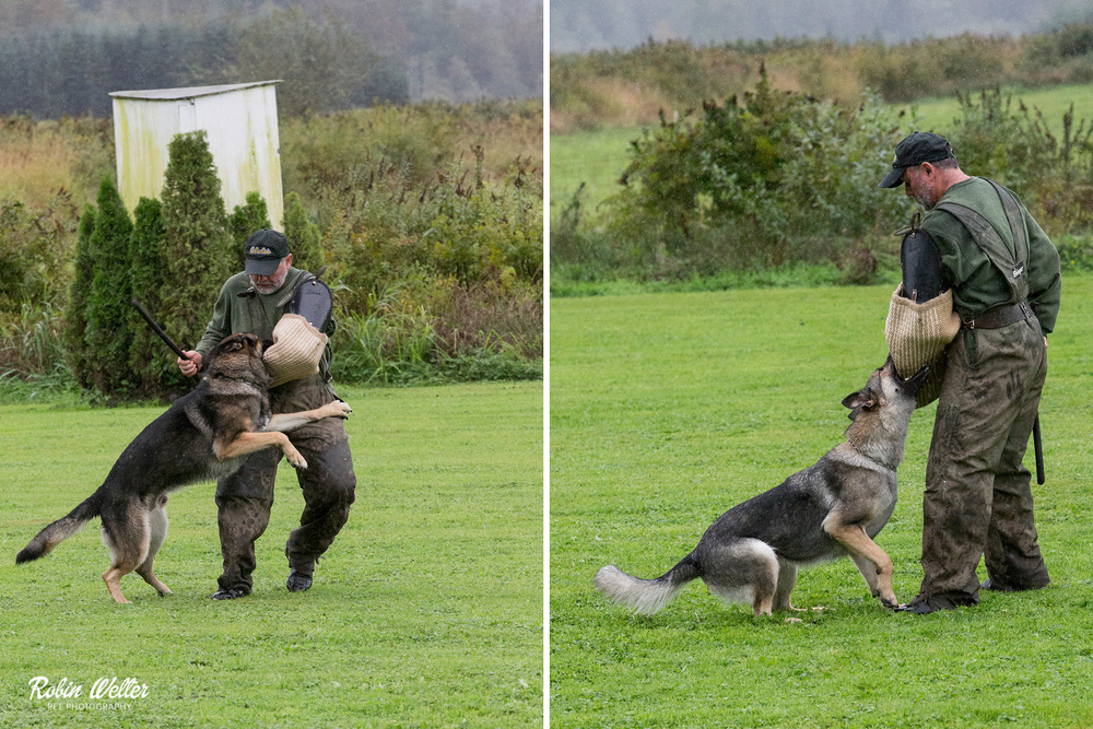 Snohomish Schutzhund Club- Washington