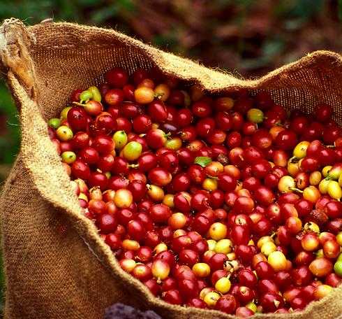Kona Coffee Cultural Festival 3.jpg