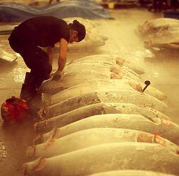 Tsukiji Fish Market, Tokyo 1b.jpg
