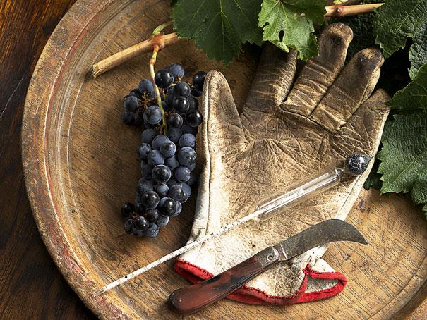 Winemaker q.jpg