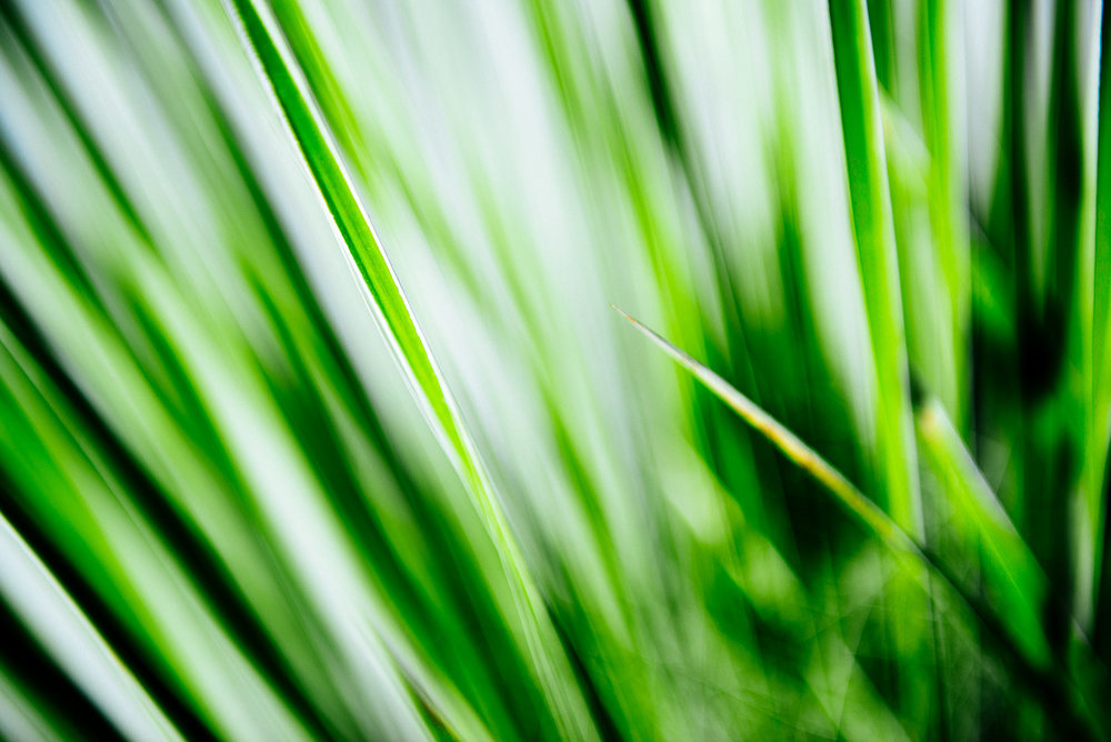 shunluoifong-still-plant.jpg