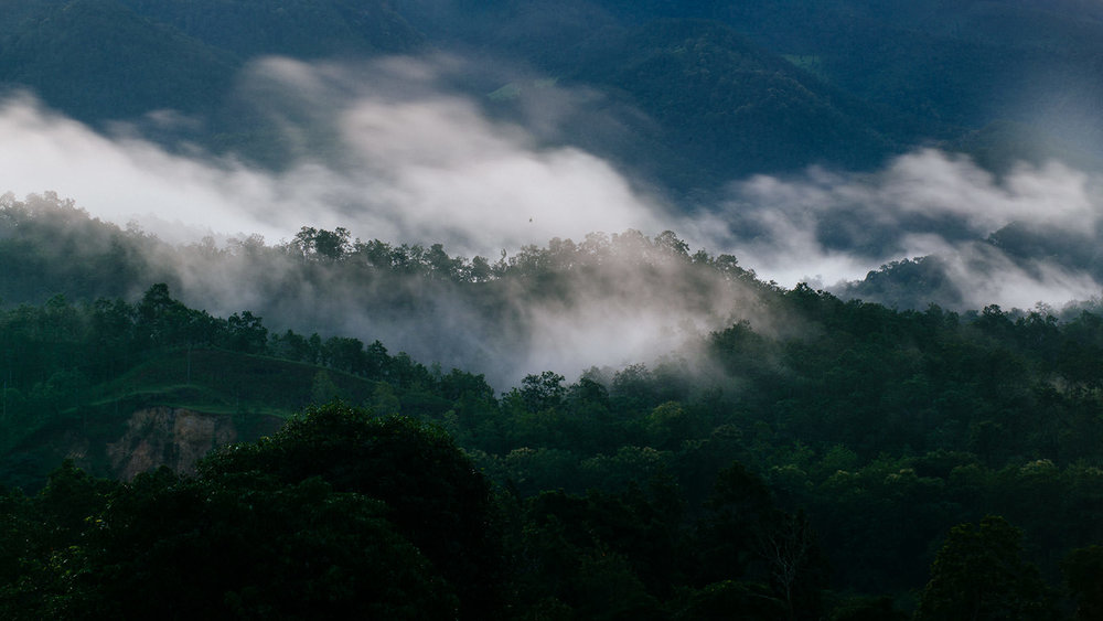 Fog moves in and out of the hills near the Thai-Burma border in northern Thailand