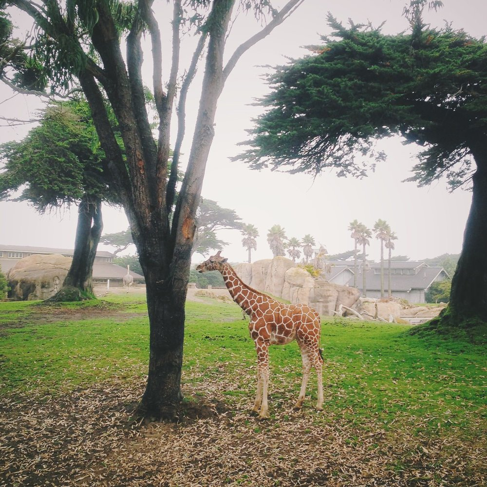 San Francisco Zoo, San Francisco, California