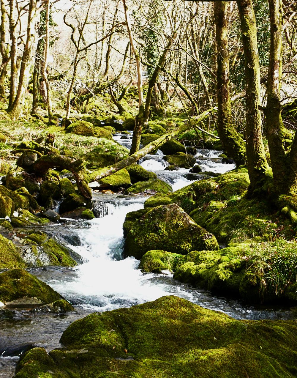 Wales Easter 2010_0111.Web.jpg