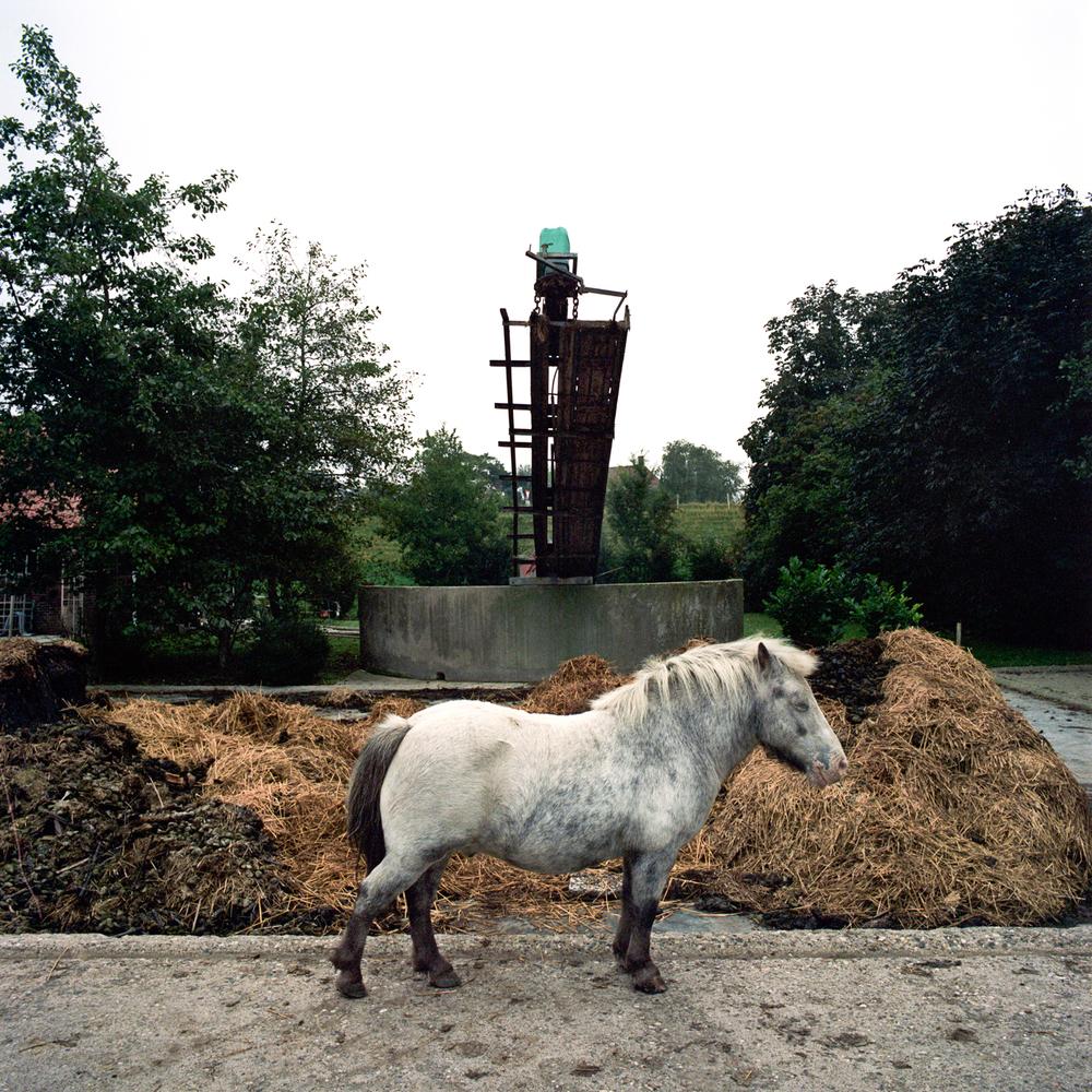 – Shetlandpony, Middenbeemster